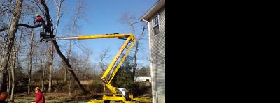 hoist up tree-1